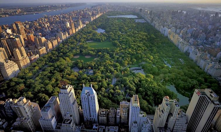 Шуршим зеленью: деревья помогают городам экономить