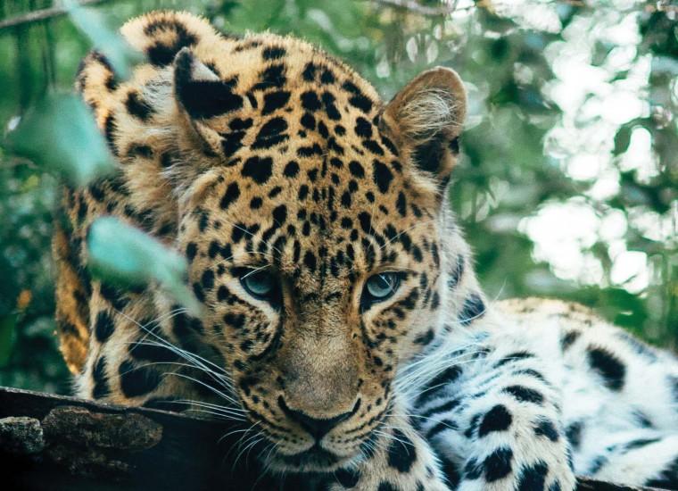 Зоопарки: природа идет к нам