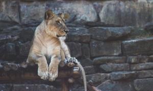 Зоопарки мира. Топ-10