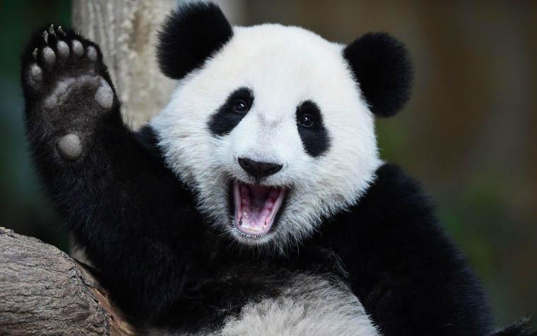Зверополис в мегаполисе: самые-самые зоопарки мира