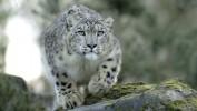 Новосибирский зоопарк: больше животных хороших и разных