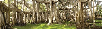 Деревья-рекордсмены