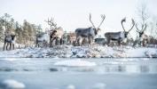 зоопарк Рануа в Финляндии