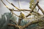 Новосибирскому зоопарку 70 лет