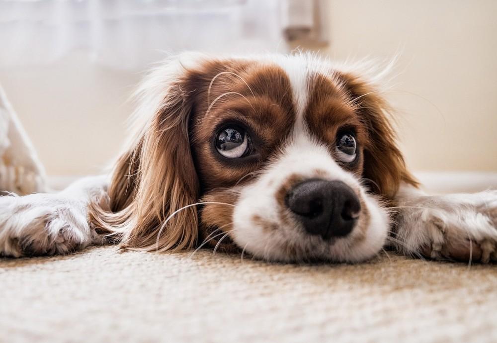 Застройщиков предложили обязать создавать площадки для выгула собак