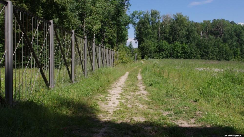 Лесная амнистия в Новосибирской области