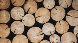 С 4 февраля транспортировка древесины и продукции из нее допускается только при наличии электронного сопроводительного документа