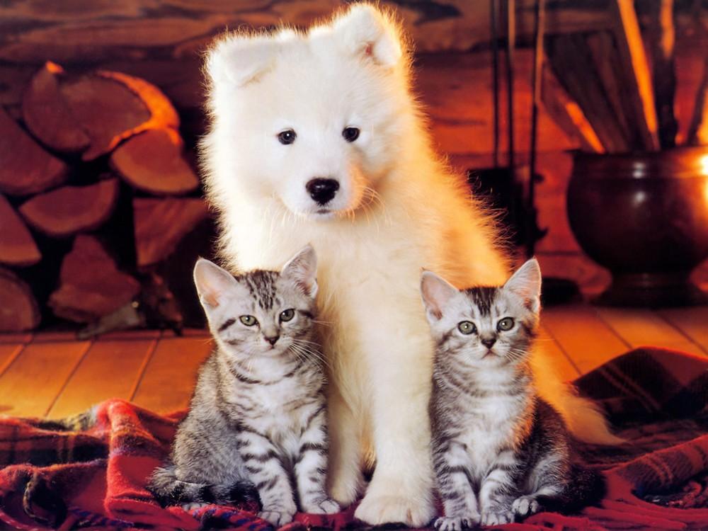 Число проживающих в квартирах домашних животных планируют ограничить