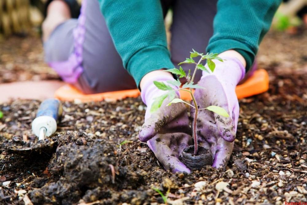 Садоводам разрешат выкупать арендуемую землю без торгов