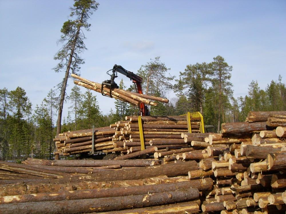 Более тысячи гектаров леса высажено в Новосибирской области в 2018 году