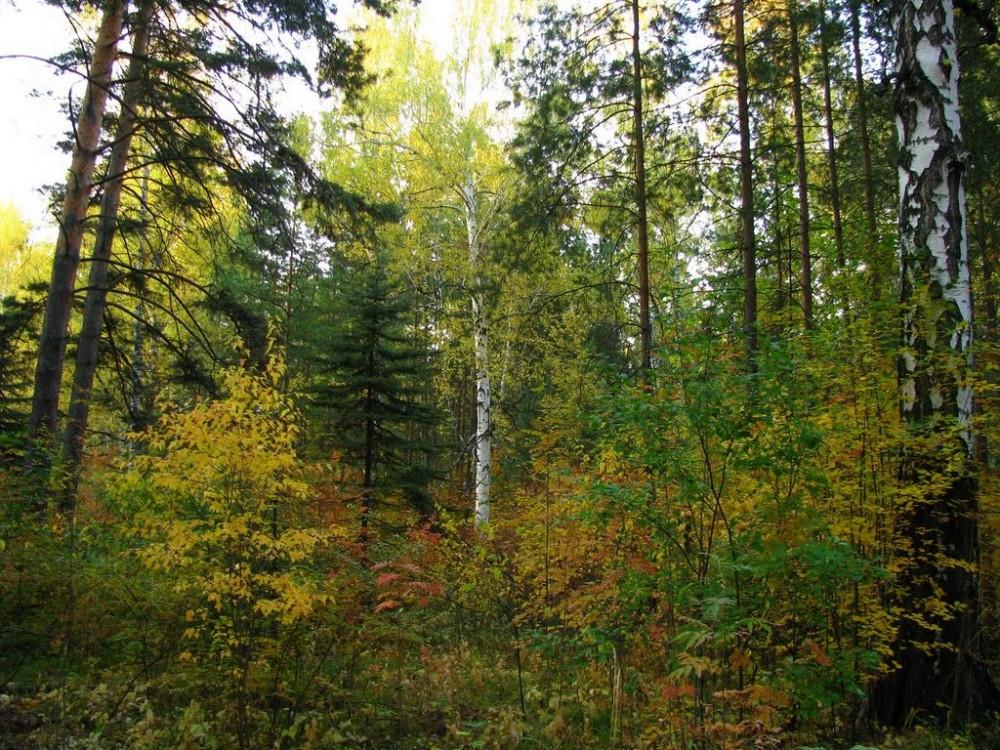 Зеленый пояс Новосибирска